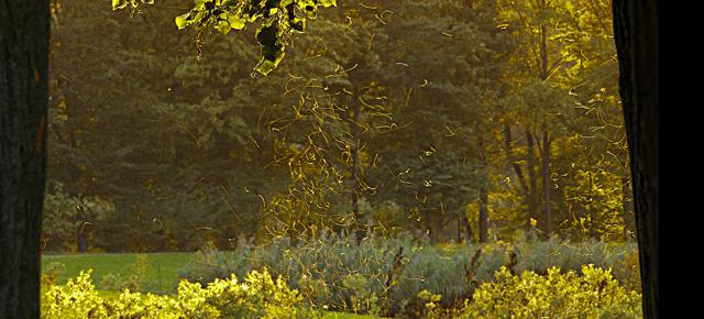 Cuentos fantásticos, Ludwig Tieck: Maravillas románticas