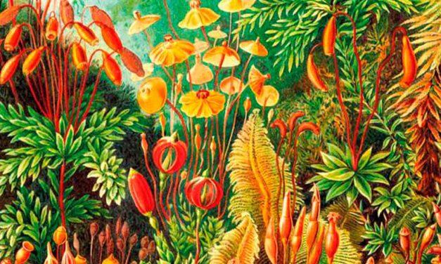 Vorrh. El bosque infinito, Brian Catling: Literatura fantástica con nuevas reglas