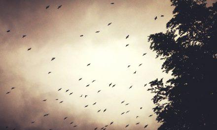 Los pájaros, Daphne du Maurier: ¡A las trincheras, esto es una emboscada!